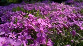 Nam bloemen in de tuin toe Royalty-vrije Stock Afbeeldingen