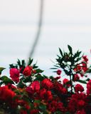 Nam bloemen toe stock fotografie