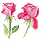 Nam de getrokken botanische die illustratie van de bloemenwaterverf hand op witte achtergrond voor ontwerppatroon wordt geïsoleer stock illustratie