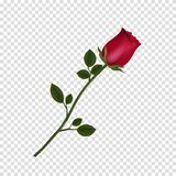 Nam de hoogst gedetailleerde bloem van rood geïsoleerd op transparante achtergrond toe royalty-vrije illustratie
