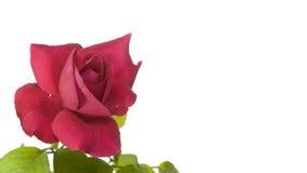 Nam de rode valentijnskaart van Cerise bloem toe Stock Foto's