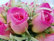 Nam de roze aard van de bloemschoonheid toe Royalty-vrije Stock Foto's