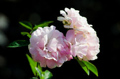 Nam in een tuin toe Royalty-vrije Stock Afbeelding