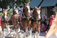 2014 nam festival doordringen toe Royalty-vrije Stock Afbeeldingen