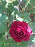 Nam gele bloem, de zomertuin toe royalty-vrije stock foto's
