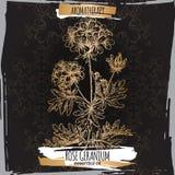 Nam geraniumschets op elegante zwarte kantachtergrond toe Royalty-vrije Stock Afbeelding