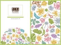 Nam het bloemenontwerp van de menudekking met pastelkleurcelandine, kamille, hond, hop, de artisjok van Jeruzalem, pepermunt toe stock illustratie