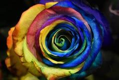 Nam installatie, multicolored bloem van Holambra Brazilië toe stock afbeelding