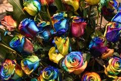 Nam installatie, multicolored bloem van Holambra Brazilië toe royalty-vrije stock afbeeldingen