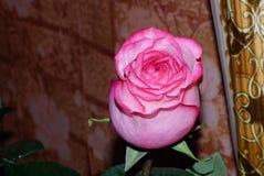 Nam - Koningin van bloemen toe Royalty-vrije Stock Afbeeldingen