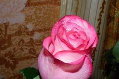 Nam - Koningin van bloemen toe Royalty-vrije Stock Fotografie