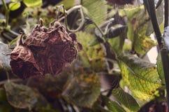 Nam langzaam verdwenen toe (gestorven onderaan) Droge bloemenstruik De tuin van de herfst Een kar met een stapel van gevallen bla Stock Afbeeldingen