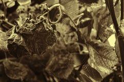 Nam langzaam verdwenen toe (gestorven onderaan) Droge bloemenstruik De tuin van de herfst Een kar met een stapel van gevallen bla Stock Fotografie