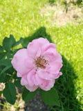 Nam met heldere roze kleur toe royalty-vrije stock afbeeldingen