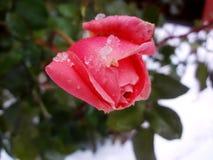 Nam onder de sneeuw toe (рР¾ за Ð ¿ Ð ¾ Ð Ñ  Ð ½ Ð?Ð ³ Ð ¾ Ð ¼) Royalty-vrije Stock Afbeeldingen
