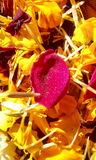 Nam op bed van goudsbloem toe Royalty-vrije Stock Fotografie
