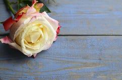 Nam op blauwe houten achtergrond toe voor de Dag van Valentine ` s met exemplaarruimte Valentine Rose Royalty-vrije Stock Foto's