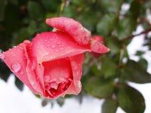 Nam op sneeuw а toe (рР¾ за Ð ¿ Ð ¾ Ð Ñ  Ð ½ Ð?Ð ³ Ð ¾ Ð ¼) Royalty-vrije Stock Fotografie