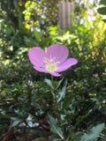 Nam roze in de hemel toe stock fotografie