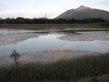 Nam Sang Wai Wetland. In Hong Kong China Stock Photos