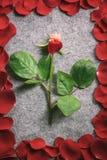 Nam stam door zijn rode bloemblaadjes wordt omringd dat toe Stock Fotografie