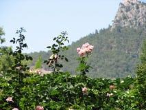 Nam struiken op bergachtergrond toe Royalty-vrije Stock Afbeelding