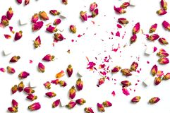 Nam theebloemen op witte achtergrond toe Royalty-vrije Stock Foto