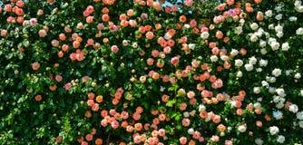 Nam tuin bij Ashikaga-Park in Japan toe stock afbeeldingen