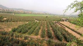 Nam tuin is nog niet bloeiend toe stock footage