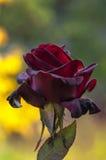 Nam tuin toe Royalty-vrije Stock Afbeeldingen