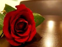Nam in volledige bloei toe Royalty-vrije Stock Foto's
