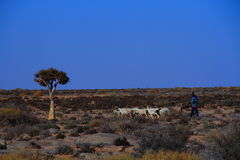 Nama shepherd and sheep Northern Cape Province South Africa Stock Photos