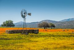 Namaqua lantgård Arkivbild