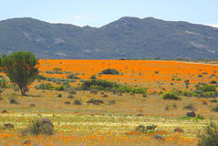 Southern african landscapes. Namaqua National Park in South Africa Royalty Free Stock Photography