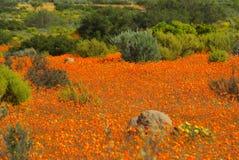Den sydliga afrikanen landskap Arkivbilder