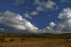 Namaqualand Blumen Lizenzfreies Stockbild