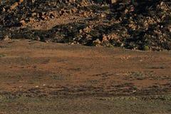 Namaqualand Południowa Afryka krajobraz Zdjęcie Stock