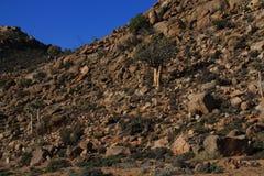Namaqualand Południowa Afryka krajobraz Obraz Royalty Free