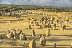 Nambung nationalpark Royaltyfria Foton
