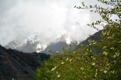Namche barwa snow mountain with flower in front Royalty Free Stock Images
