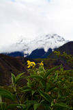 Namche barwa snow mountain with flower in front Royalty Free Stock Photography