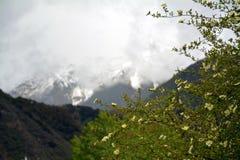 Namche barwy śnieżna góra z kwiatem w przodzie Obrazy Royalty Free
