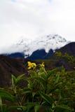 Namche barwy śnieżna góra z kwiatem w przodzie Fotografia Royalty Free