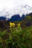 Namche barwy śnieżna góra z kwiatem w przodzie Zdjęcie Stock