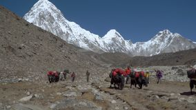 Tourists, porters and yaks on the trail in the Himalayas. NAMCHE, NEPAL - OKTOBER 22, 2017: Many tourists, porters and yaks are moving along the path leading to stock video footage