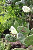 Name initials as symbols of love cut out into cactus Royalty Free Stock Photos