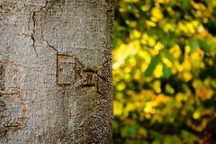 Name schnitzte in einen Baum im Wald Lizenzfreies Stockfoto