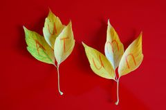 The name of the season is written on yellow autumn leaves. royalty free stock photo