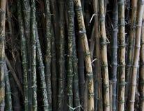 Name written on bamboo trees stock photos