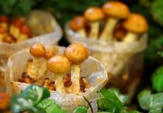 Nameko mushroom Royalty Free Stock Photography